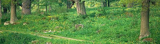 skog-bred